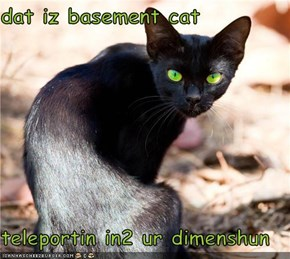 dat iz basement cat  teleportin in2 ur dimenshun