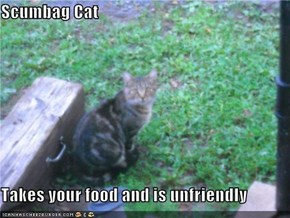 Scumbag Cat  Takes your food and is unfriendly