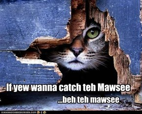If yew wanna catch teh Mawsee