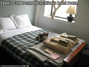 Sood's Cat Dreamed vacation's hotel room.