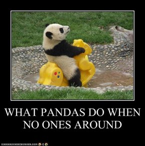 WHAT PANDAS DO WHEN NO ONES AROUND