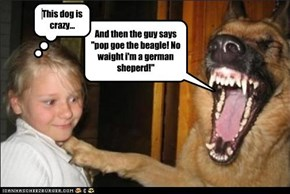 "And then the guy says ""pop goe the beagle! No waight i'm a german sheperd!"""