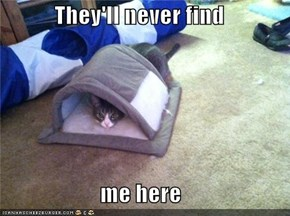 They'll never find  me here