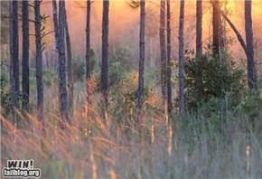 Mother Nature FTW: Just a Little Light