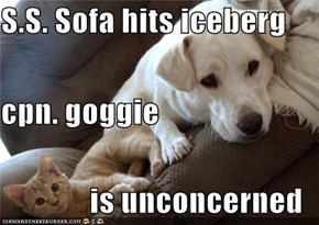 S.S. Sofa hits iceberg cpn. goggie is unconcerned