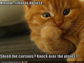 Hmmm...what to do first...  Shred the curtains? Knock over the plants?