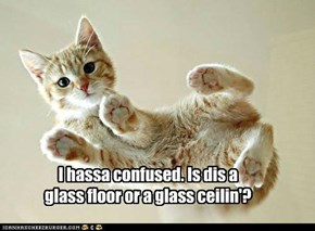 I hassa confused. Is dis a glass floor or a glass ceilin'?