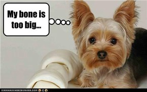 My bone is too big...