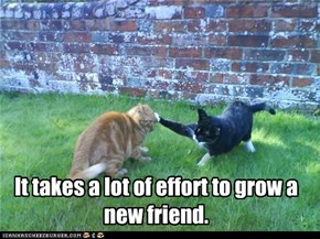 It takes a lot of effort to grow a new friend.