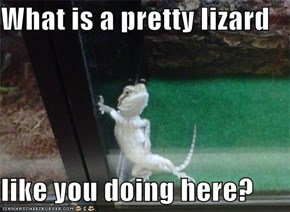 What is a pretty lizard   like you doing here?