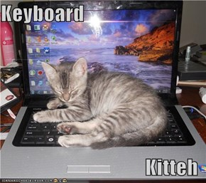 Keyboard  Kitteh