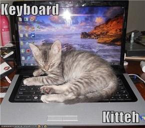 Keyboard  Kitteh