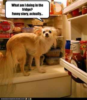 What am I doing in the fridge? Funny story, actually...