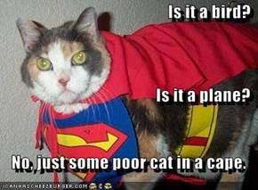 Is it a bird? Is it a plane? No, just some poor cat in a cape.