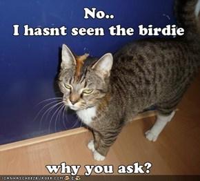 I hasnt seen the  birdie