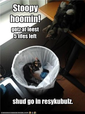 Kitteh in lann fill cawzez globul worming!