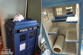 Cat Tardis WIN