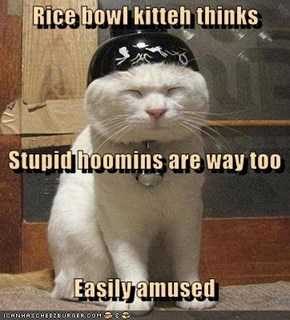 Rice bowl kitteh thinks    Stupid hoomins are way too   Easily amused