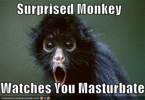 Surprised Monkey  Watches You Masturbate