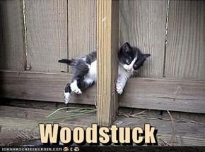 Woodstuck