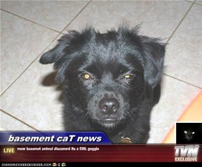 basement caT news - mew basemet animal discoverd its a EBIL goggie