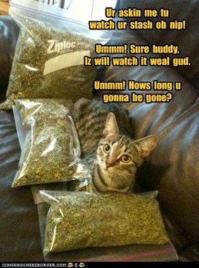 Ur  askin  me  tu   watch  ur  stash  ob  nip!  Ummm!  Sure  buddy, Iz  will  watch  it  weal  gud.  Ummm!  Hows  long  u gonna  be  gone?