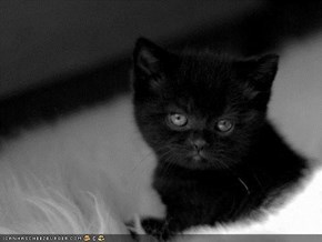 Cyoot Kitteh of teh Day: I Has an Emo