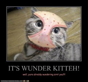 IT'S WUNDER KITTEH!