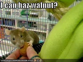I can haz walnut?