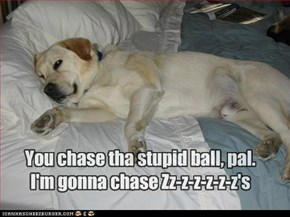 You chase tha stupid ball, pal. I'm gonna chase Zz-z-z-z-z-z's