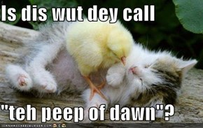 "Is dis wut dey call  ""teh peep of dawn""?"