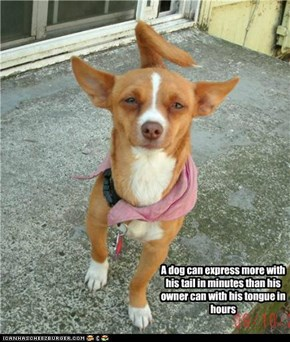 A dog can express more with his tail in minutes than his owner can with his tongue in hours