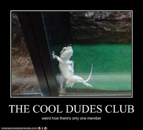 THE COOL DUDES CLUB