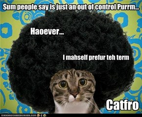 Groovy Cat - Sum people say is just an out of control Purrm...
