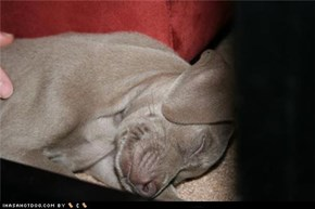 Lola at 6 weeks