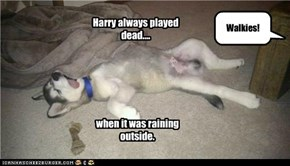 Harry always played dead....