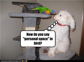 "How do you say ""personal space"" in bird?"