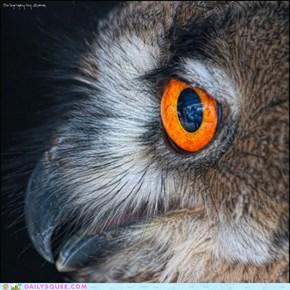 Ocular Spectacular