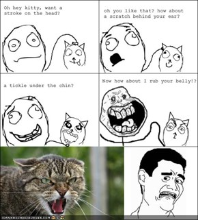 MemeCats: Who Loves Belly Rubs?!