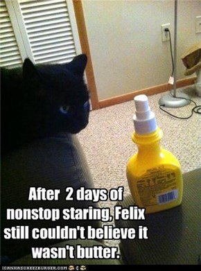 After  2 days of nonstop staring, Felix still couldn't believe it wasn't butter.