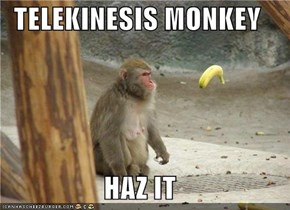 TELEKINESIS MONKEY  HAZ IT