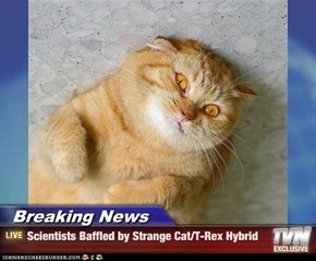 Breaking News - Scientists Baffled by Strange Cat/T-Rex Hybrid