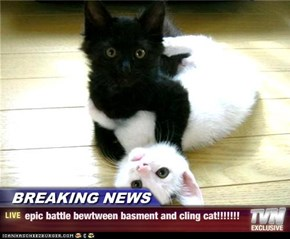 BREAKING NEWS - epic battle bewtween basment and cling cat!!!!!!!