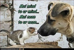 Inter-species mind melding