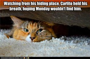Watching from his hiding place, Carlito held his breath, hoping Monday wouldn't find him.