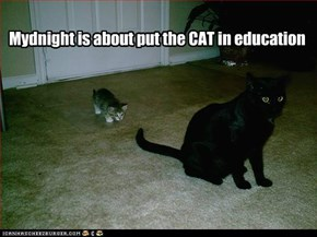 Mydnight is about put the CAT in education