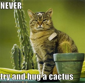 NEVER  try and hug a cactus