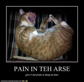 PAIN IN TEH ARSE