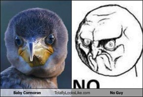 Baby Cormoran Totally Looks Like No Guy