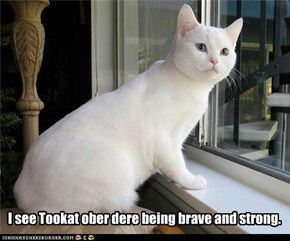 I see Tookat ober dere being brave and strong.